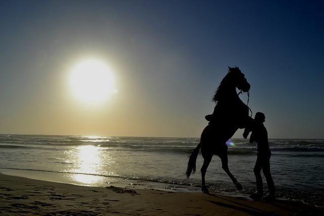 gaza-horse